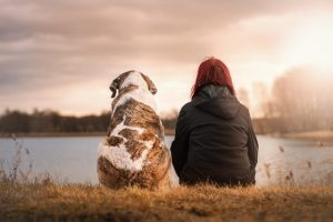 put pet provision in a will